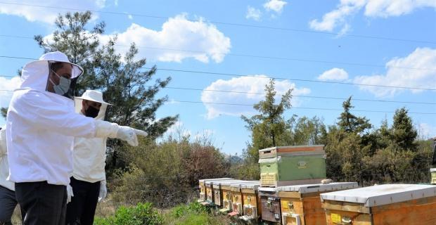 200 arı işletmesindeki 13 bin koloniyi ilaçlayacaklar