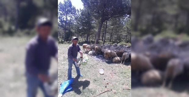 Bu da çevreci çoban