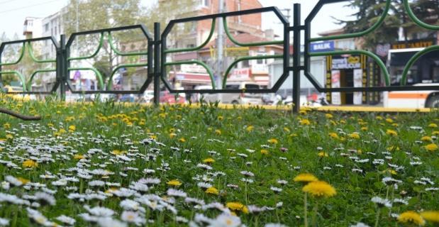 Çimen çiçekleri Eskişehir'i şenlendirdi