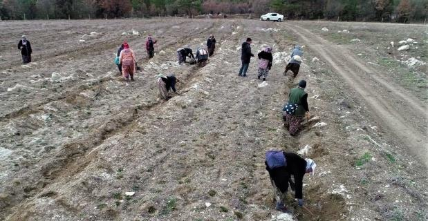 Gelir getirici türlerle köylülere destek