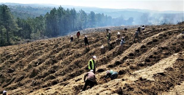 Kütahya'da yanan orman sahasına 5 bin fidan dikildi