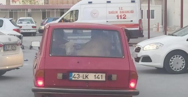 Bagajda koyun var
