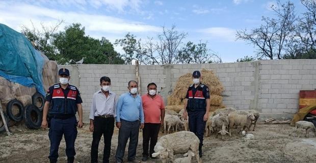 Çalınan hayvanlar Afyonkarahisar'da bulundu