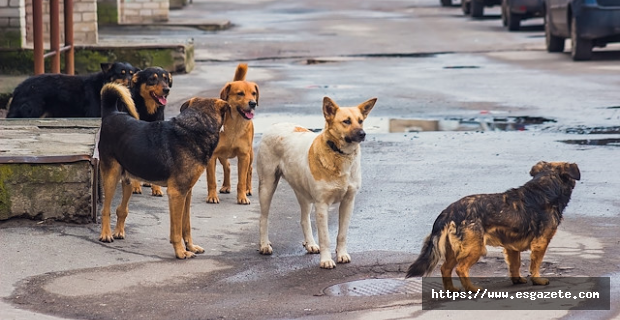 Rottweiler Bodyguard Egitimi Nasil Verilmeli?