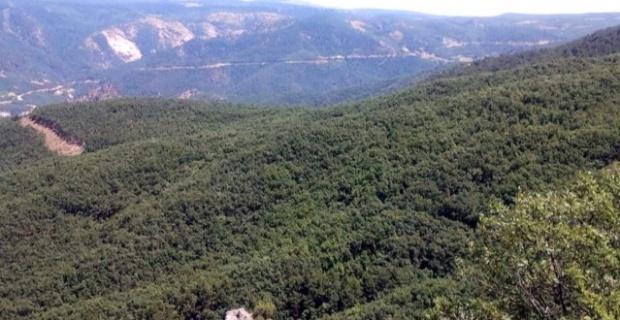 Eskişehir'de ormanlara giriş yasaklandı
