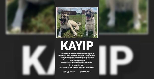 Eskişehirspor'un köpeği kayboldu