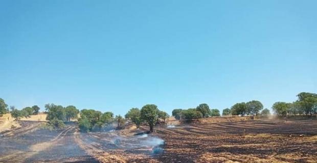 Gediz'de arazi yangını