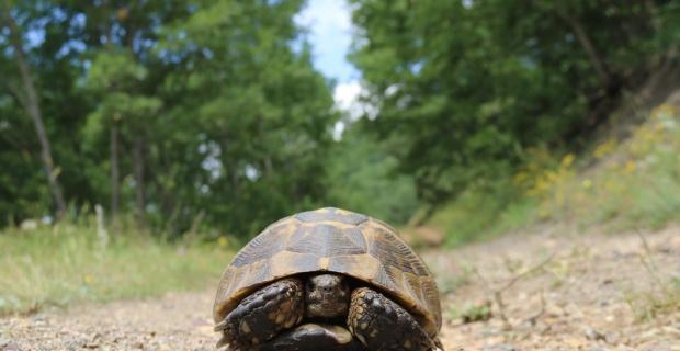 Sevimli kaplumbağadan kartpostallık pozlar