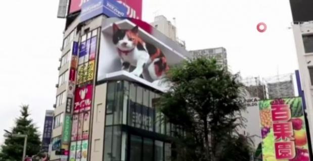 Tokyo'daki 3 boyutlu dev kedi gerçeğini aratmıyor