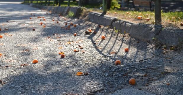 Yürek sızlatan meyve israfı