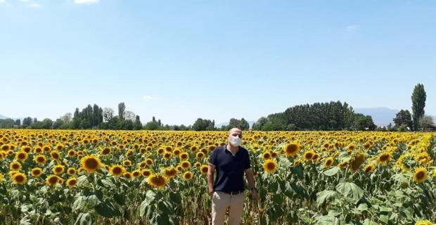 3 bin dekarlık ayçiçeği tarlaları görsel şölen oluşturdu