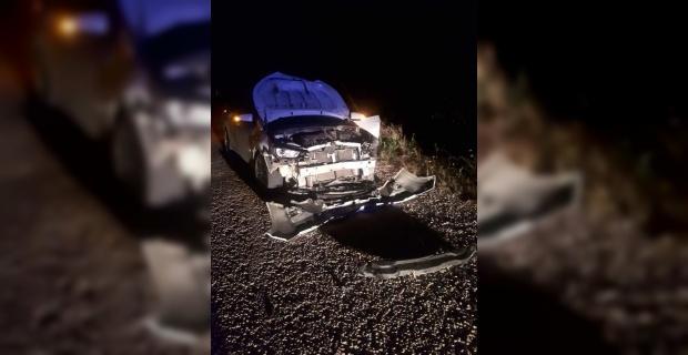 Domuza çarpan otomobil sürücüsü yaralandı