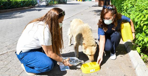 Hayvanlar için bir kap su bir kap mama