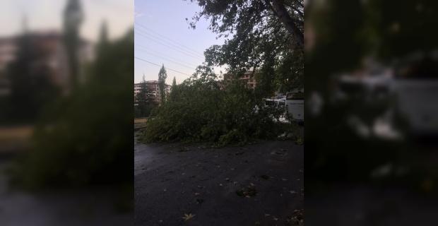 Afyonkarahisar'da şiddetli rüzgar hayatı olumsuz etkiledi