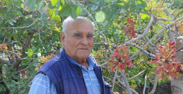 Eskişehir'de Antep fıstığı yetiştirdi