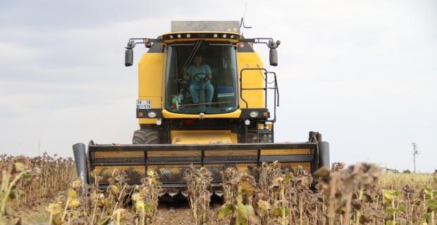 Tohumluk ayçiçeği hasadı üreticilerin yüzünü güldürdü