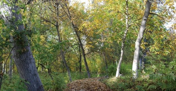 Günyüzü'nden eşsiz sonbahar manzaraları