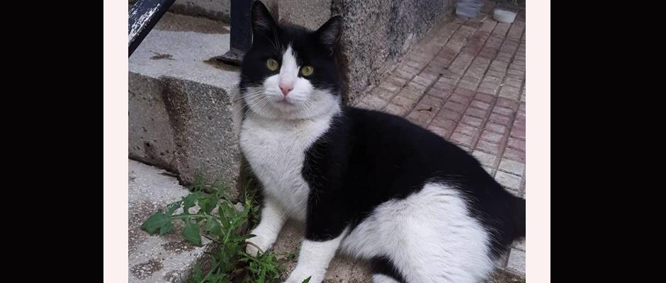 Kayıp kedisini her yerde arıyor/Kütahya