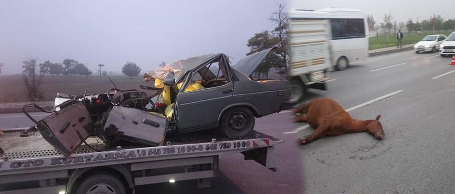 Çevre yolunda otomobilin çarptığı at telef oldu