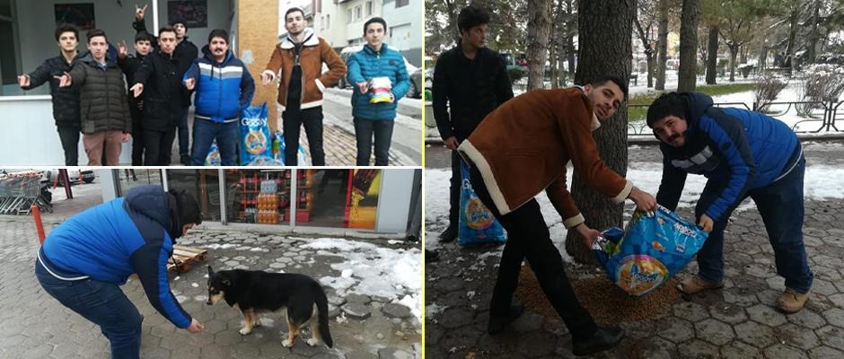 Ülkü Ocağından sokak hayvanlarına yardım