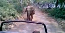 Öfkeli fil safaricileri kovaladı