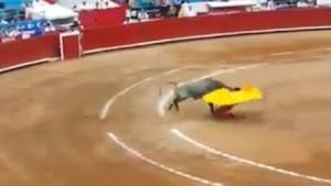 Boğa matadorlara arenayı dar etti !