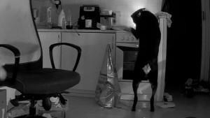 Çekya'da bir köpek, yemek ararken mutfağı ateşe verdi
