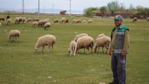 Çobanlar üretimin devamlılığı için işlerinin başında