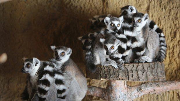 Hayvanat Bahçesi'ne Yeni Yavrular