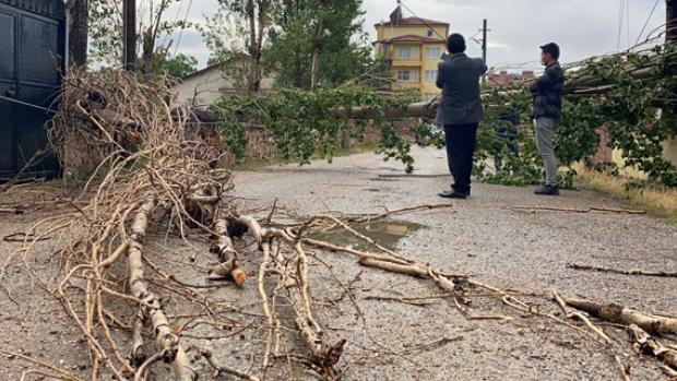 Rüzgar ağacı devirdi, iletişim hatlarını kopardı