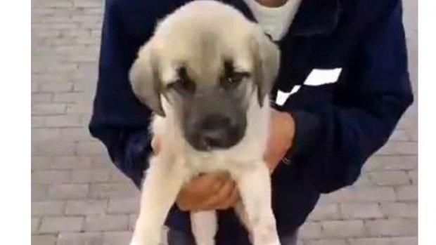 Polislerin sevgisi yavru köpeği hayata bağladı