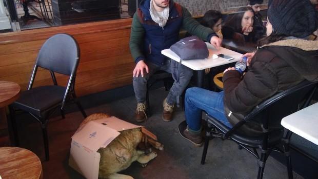 Kartonu ısıtıp köpeğin üstüne örttü