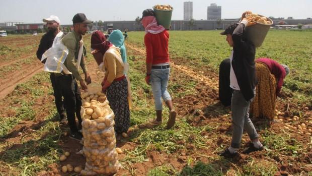 Patates üreticisinde fiyat düşecek korkusu