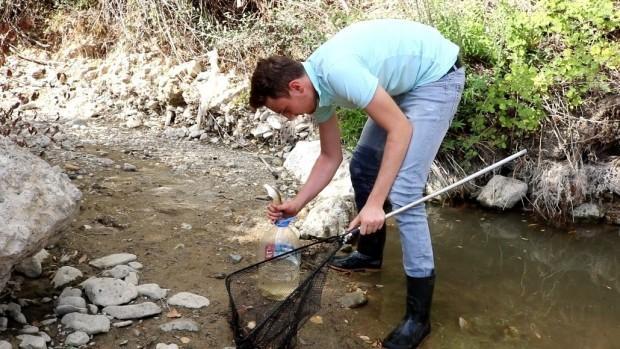 Suyu azalan çayda ölmek üzere olan 200 balığı başka çaya taşıdı