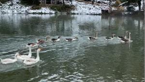 Limni Gölü Tabiat Parkı'ndan eşsiz görüntüler