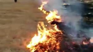 Seyitgazi'de çıkan yangında 5 dönüm tarım arazisi küle döndü